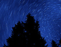 Pine Tree and Startrails Stock Images