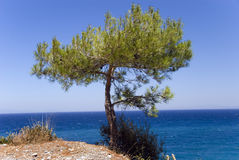Pine-tree on a steep above the Royalty Free Stock Images