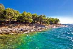 Pine tree and stone beach. With crystal clear turquoise sea in Island of Murter, Croatia Stock Photos