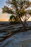 Pine tree on Stone Mountain, USA Stock Images