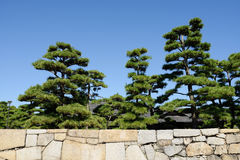 Pine tree with stone wall Stock Photos