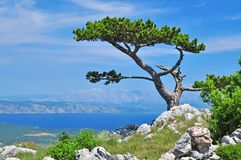 Hvar landscape tree Royalty Free Stock Images