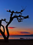 Pine tree at sunset 2 Royalty Free Stock Photography