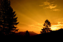 Pine Tree Sunset. Sunset landscape with silhouettes of pine trees and mountain Stock Photo