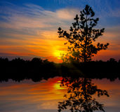 Pine tree on sunset background Stock Images