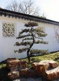 Pine tree, Suzhou. Pine tree in Garden, Suzhou, Jiangsu Province, China Stock Image
