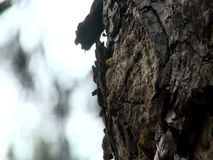Pine tree texture with background of the forest. During the late autumn stock video footage