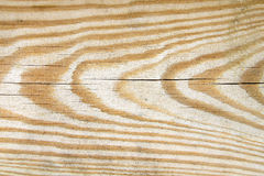 Pine tree texture Stock Image