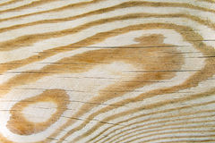 Pine tree texture Stock Images