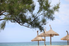 Pine tree with thatched beach umbrellas Royalty Free Stock Photography
