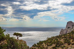 Seascape, the juniper tree on top of a cliff against the sea stock photography