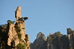 Pine tree on top of Mountain stock images