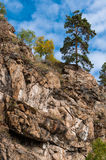 A pine tree on the top of the rock. At the bank of the Baikal lake Royalty Free Stock Image