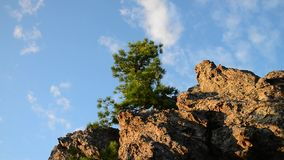 Pine-tree on top of the rock, beautiful cloudy sky at background.  stock footage