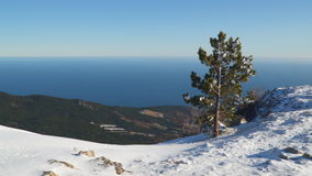 Pine tree on top of a snowy mountain. In the background, the shoreline stock footage