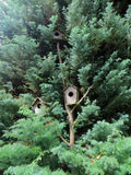 Pine tree with tree bird houses Stock Images