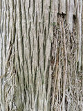 Pine Tree Trunk Bark Stock Photo