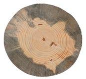 Pine tree trunk cross cut wood texture stock photo