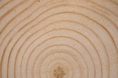 Pine tree trunk cross-section with annual rings. Lumber piece close-up. Pine tree trunk cross-section with annual rings. Lumber piece close-up shot royalty free stock photography