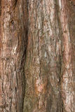 Pine tree trunk detail Stock Images