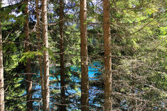 Pine tree trunks & branches. Pine tree trunks and branches on blue lake water. Trentino Alto Adige,  Italy Stock Photo