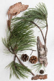 Pine Tree Twigs, Cones and Bark Pieces. On a White Background Stock Photography