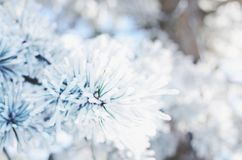 Pine tree twigs covered with snow, winter background stock images