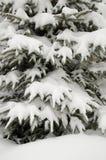 Pine tree under snow Stock Photos