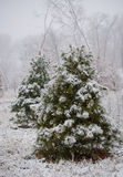 Pine tree under snow Stock Photos