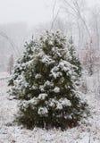 Pine tree under snow Stock Images