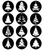Pine tree vector Stock Photos
