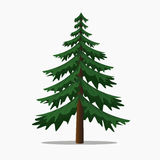 Pine Tree Vector Illustration. Big Fir. Stock Images