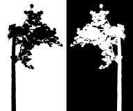 Pine tree vector silhouette. Black and white Pine tree vector silhouette stock illustration