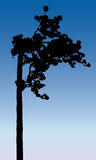 Pine tree vector silhouette. Royalty Free Stock Photos
