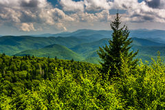 Pine tree and view of Appalachian Mountains from the Blue Ridge Stock Photography
