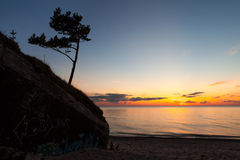 Pine tree. View on a single pine tree growing on old destroyed fort on the Baltic sea coast after sunset Stock Images
