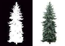 Pine tree isolated. Pine tree on white background with alpha channel royalty free stock photos