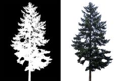 Pine tree isolated. Pine tree on white background with alpha channel royalty free stock images