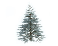 Pine Tree in Winter. Illustration of 3d Pine Tree in Winter Stock Photo