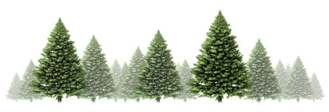 Free Pine Tree Winter Border Royalty Free Stock Image - 26592496