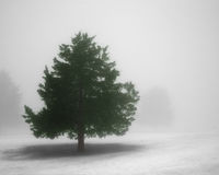 Pine tree in winter fog Royalty Free Stock Photography