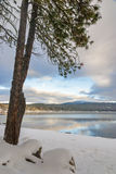 Pine tree and winter lake scene Idaho Royalty Free Stock Photography