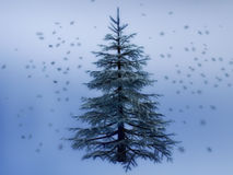 Pine Tree in Winter Night Royalty Free Stock Photos