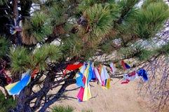 Free Pine Tree With Prayer Ties Fastened To It Stock Photo - 113701530