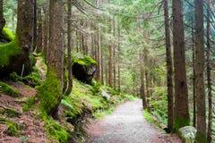 Pine tree wood Royalty Free Stock Photo