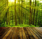 Pine tree. Wooden platform in pine tree forest, golden sunlight at Shimla during sunset, the capital city of Himachal Pradesh, India Royalty Free Stock Images