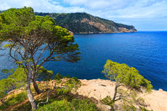 Pine trees above sea. Royalty Free Stock Images