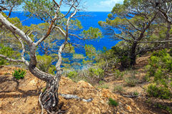 Pine trees above sea. Stock Photos
