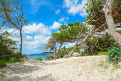 Pine trees by Alghero shoreline Royalty Free Stock Image
