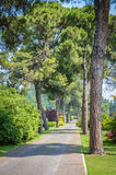 Pine trees alley Stock Images